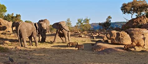 Exclusive Travel Tips for Waterberg Plateau in Namibia
