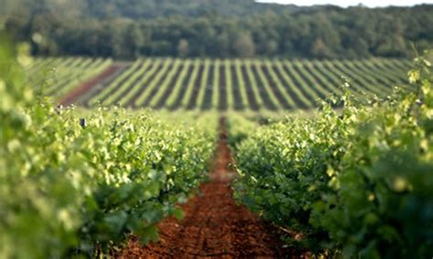 Positive news for Croatian agriculture - The Dubrovnik Times